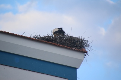 Stork nest in old town