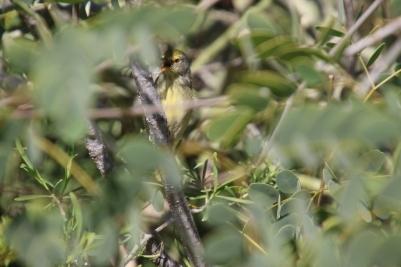 Bird hidding