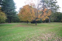 The park with the fall colours